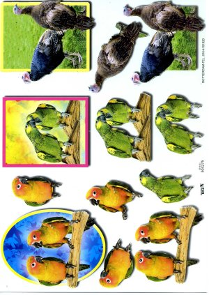 A4 Decoupage Sheet - Parrots / Birds (504275)