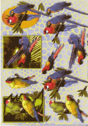 A4 Decoupage Sheet - Parrots (504162)