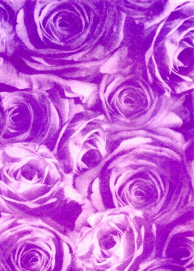 Backing Paper A4 - Purple Rose Montage (Large)