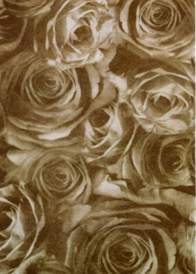 Backing Paper A4 - Chocolate Rose Montage (Large)